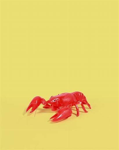 Lobster Nodding Fillers Stocking