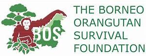 BOSF – Borneo Orangutan Survival Foundation