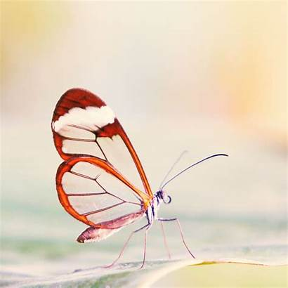 Butterfly Wings Ipad Transparent Wallpapers Air 4k