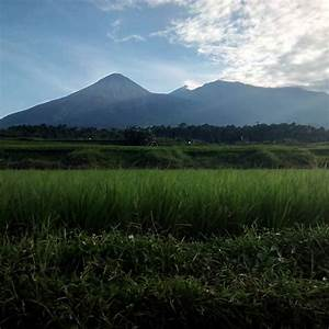 Lucban Agri Land Farm Buy or Sell - Home   Facebook