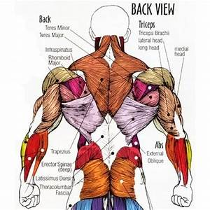 Back Workout Routine For Muscle Mass