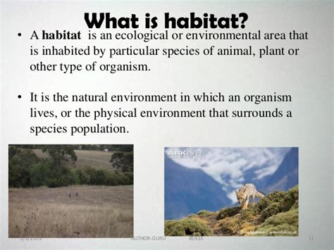 The answer to the question 'how is a habitat important for animals' can be given just in one sentence stating that 'the habitat provides a stress fee life to the animal.' Ecosystem powerpoint 1