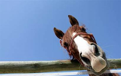 Horse Funny Wallpapers Horses Looking Curious Running