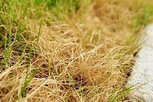 Rasen Wird Braun : braun statt gr n die beste herbstkur f r ihren rasen antenne bayern ~ Frokenaadalensverden.com Haus und Dekorationen