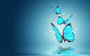 Blue Morpho Butterfly HD Wallpapers 20748