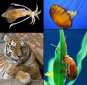 File:Animalia diversity-2.jpg