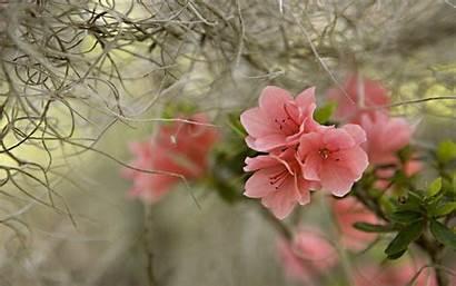 Wallpapers Scenery Spring Flower Desktop Scenic Scenes