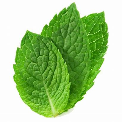 Mint Leaves Fresh Franchise Vitality Bowls