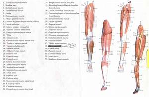 15 Best Anatomy Images On Pinterest