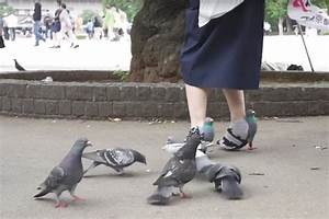 People are entranced by next level bird lovers pigeon shoes for Shoe delivering pigeons