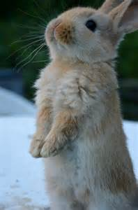 Very Cute Bunny Rabbit