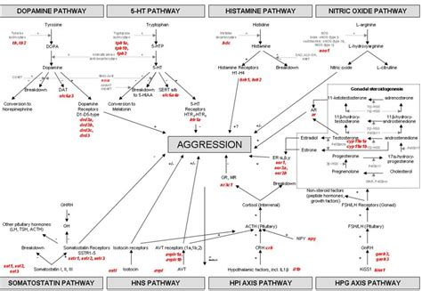 unravelling  neurophysiological basis  aggression