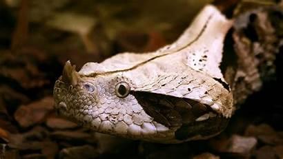 Horns Snakes Deadly Deviantart Wallpapers