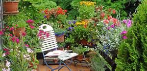 sommerblumen balkon sommerblumen anzucht und pflege sommerblumen