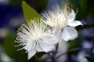 peony arrangement flower index m z fantastical wedding stylings