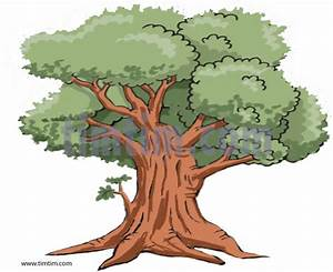 Realistic Tree Drawing | ... coloring & free online ...
