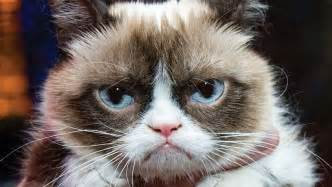 grumpy cat pictures lynch rebuffed grumpy cat voice after winning