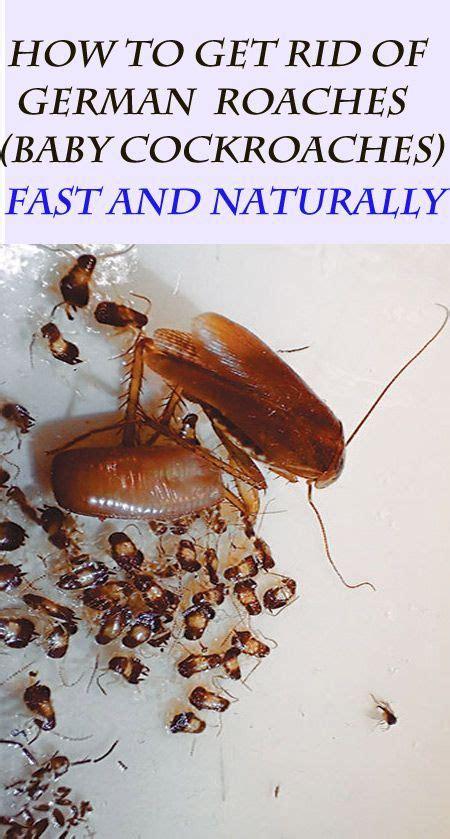 natural ways   rid  german roaches baby