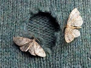 Comment Reconnaitre Mite Alimentaire Ou Textile : comment se d barrasser des mites naturellement ~ Melissatoandfro.com Idées de Décoration