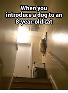 When you introduce a dog to an 8 year old cat cats meme for How to introduce a dog to a new dog