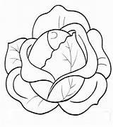 Cabbage Coloring Pages Raskraski Vegetables sketch template