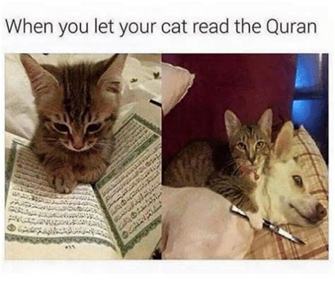 when you let your cat read the quran cats meme on sizzle