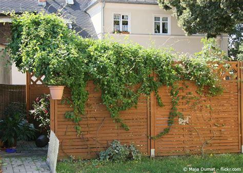 Sichtschutz Garten Zur Straße by Die Besten Ideen F 252 R Den Garten Sichtschutz Garten