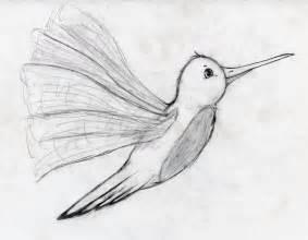 Hummingbird Drawings Sketches
