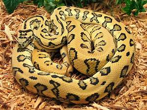 Facts About Snakes For Kids | Snake Diet & Habitat