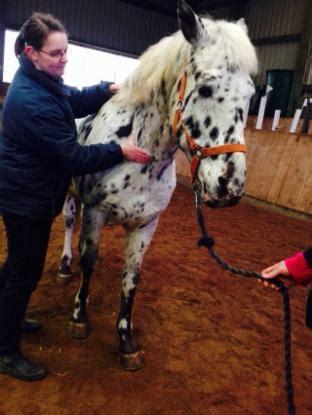 eine osteopathische behandlung pferdeosteopathie  sh