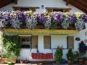 balkon bepflanzen balkonkäste bepflanzen seite 2 terrasse balkon mein schöner garten