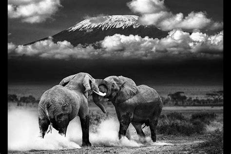 fine art images  africa stylized   african