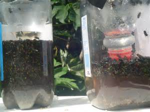 Home Fly Traps Homemade