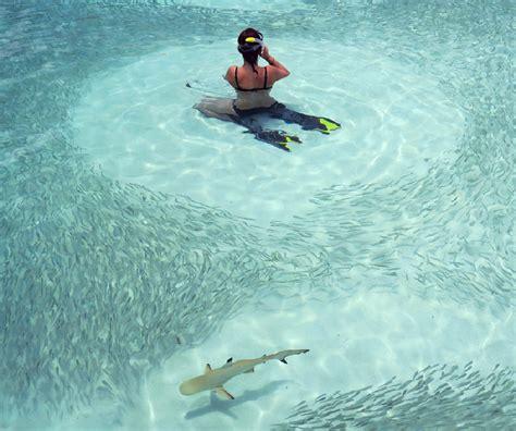 maldives snorkeling resort find    good house reef