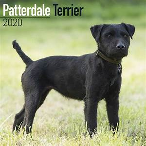 Month Calendars 2020 Patterdale Terriers Calendar 2020 At Calendar Club