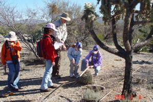 junior rangers  saguaro national park saguaro national