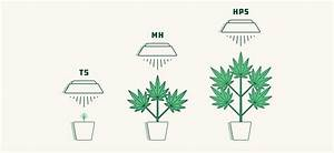 How To Select The Best Lights For Growing Weed