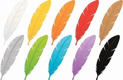 Feathers Vector Feather Eagle Clip Colored Multi