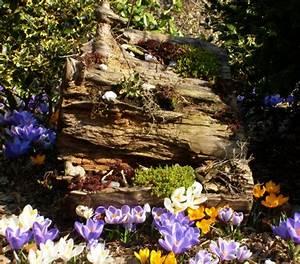 Baumstumpf Entfernen Hamburg : baumstumpf bepflanzen fabulous mit diesen gemsen knnen ~ Lizthompson.info Haus und Dekorationen