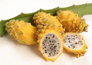 Dragon fruit nutrition facts and health benefits | HB times