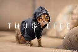 cat thug thug cat cats money and hoes