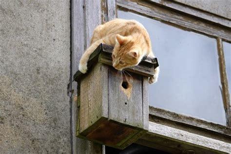 nichoirs et petites maisons pour les oiseaux entretenez et embellissez votre jardin avec mr