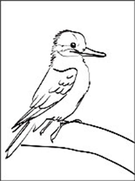 kookaburra printable  coloring page coloring pages