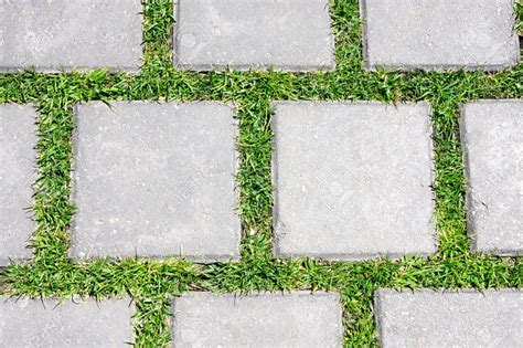 outdoor with grass and paving stones texture tamingthesat