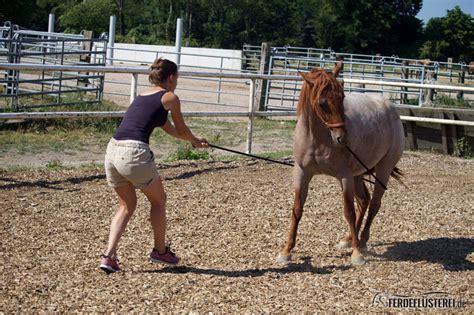 Inhalator Pferd Selber Bauen