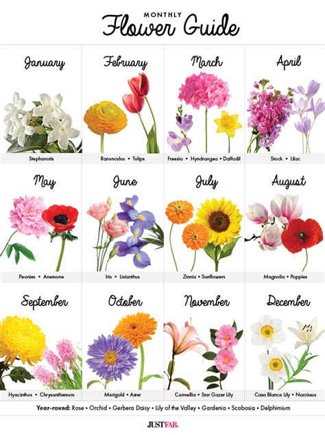 visual guide  wedding flowers  month