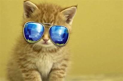 Animal Wallpapers Backgrounds Desktop Tablet Kitten Mobile