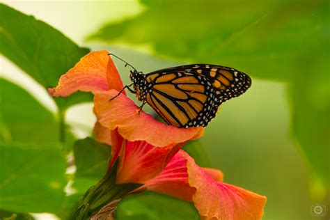 orange butterfly background high quality  backgrounds