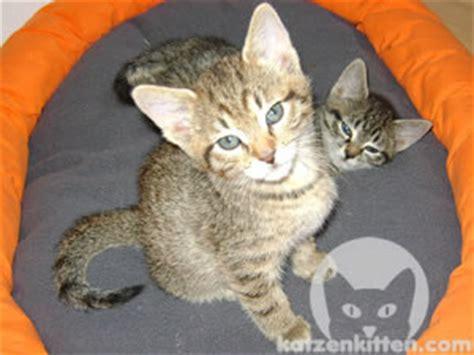 Entwurmen Katze Kosten