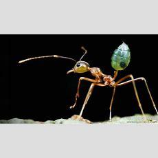 مارلين زوك ماذا نتعلم من العادات الغريبة لتزواج الحشرات؟  Ted Talk Tedcom